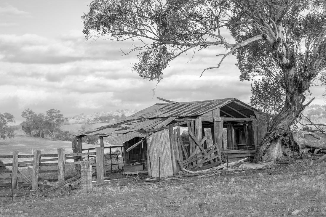 Still Standing - Millah Murrah, NSW, Australia