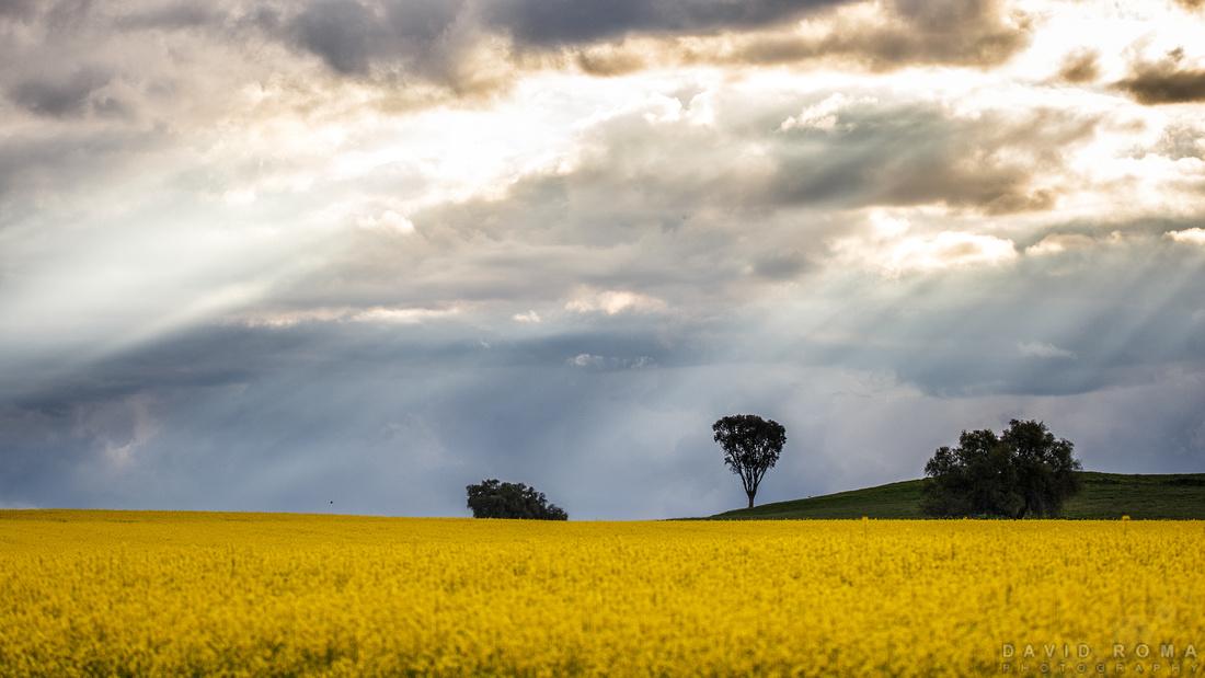 Golden rays - Cowra, NSW, Australia