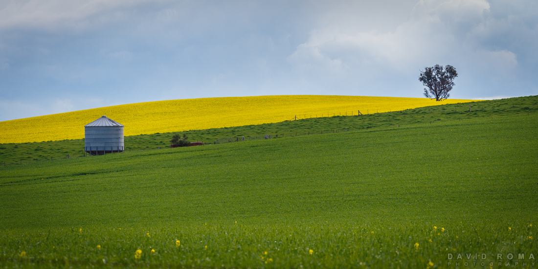 Green n Gold - Cowra, NSW, Australia