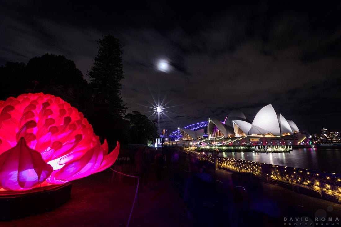 Waratah - Vivid Sydney