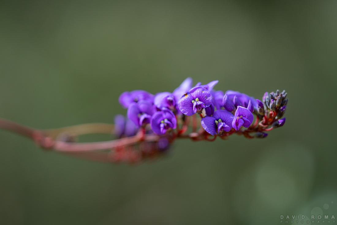 Native Spring