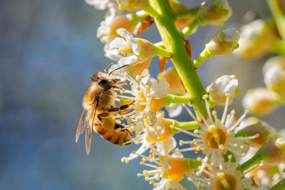 Bee Detailing