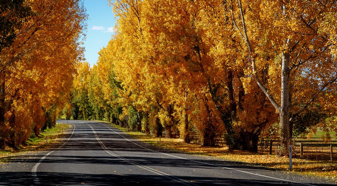 Welcome Autumn - Bathurst, NSW, Australia