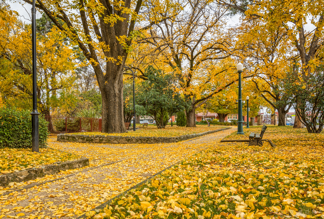 Autumn in full swing - Machattie Park, Bathurst, NSW, Australia
