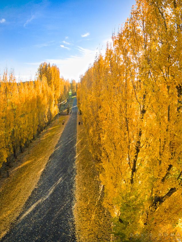 Autumn Heights