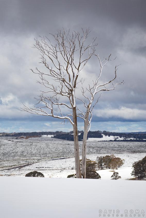 Winters Tree