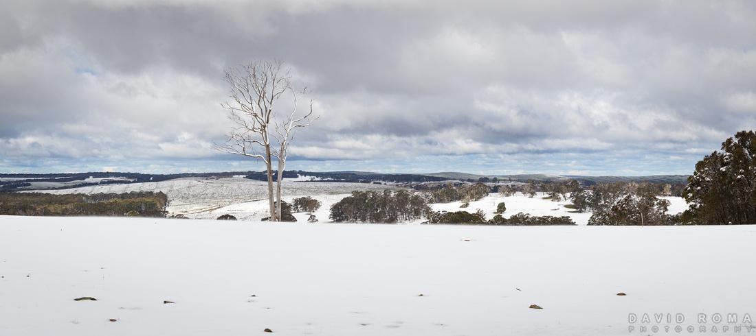 Winters Tree panorama