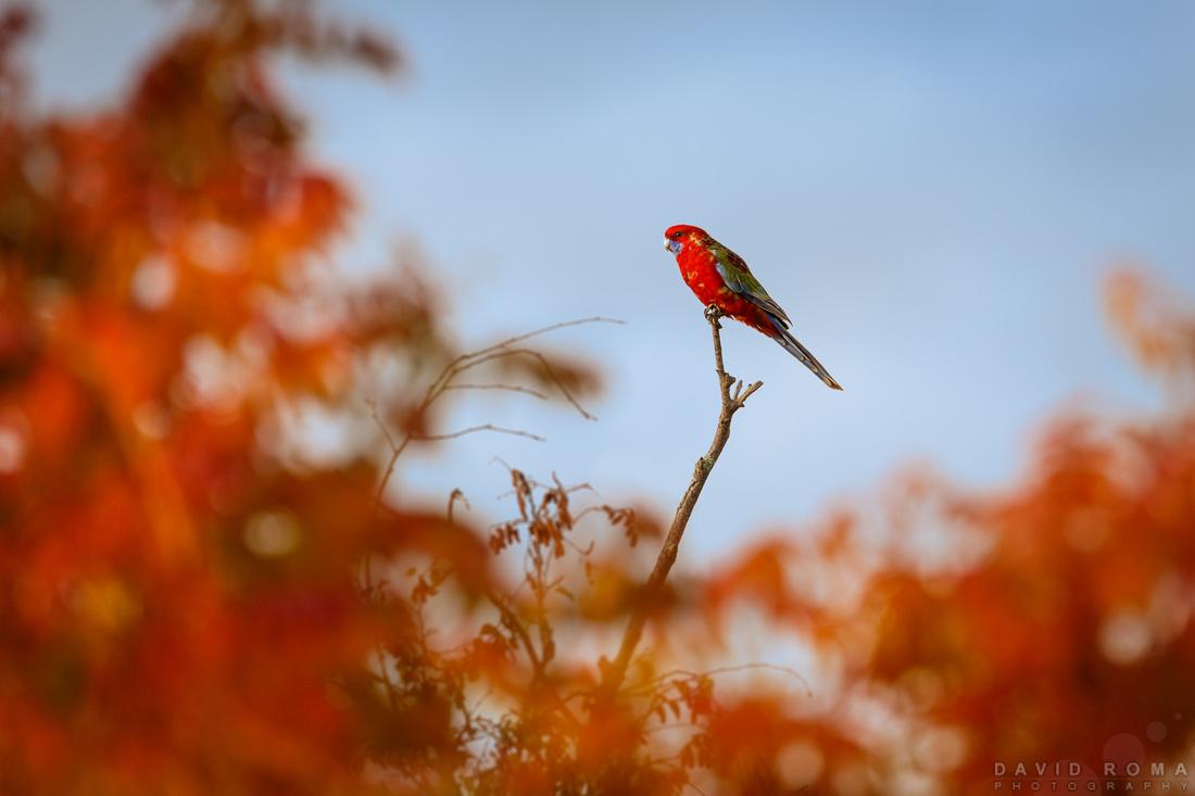 Nissan Rock Hill >> Autumn Soup Bird