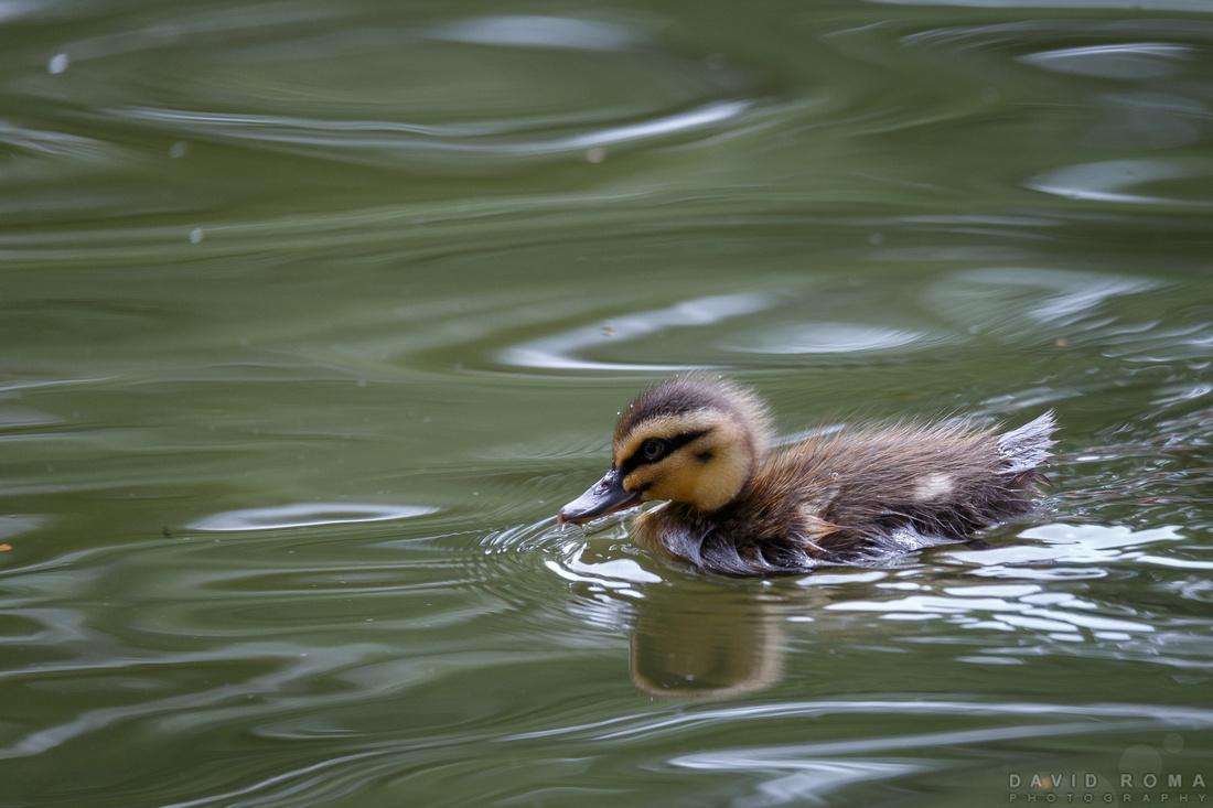Wait up Mum! - Machattie Park, Bathurst, NSW, Australia