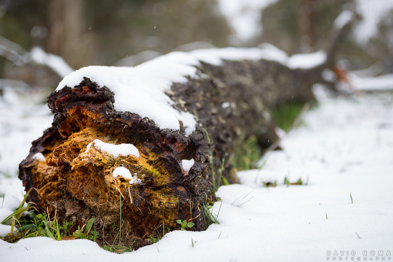Cold Colourful Log