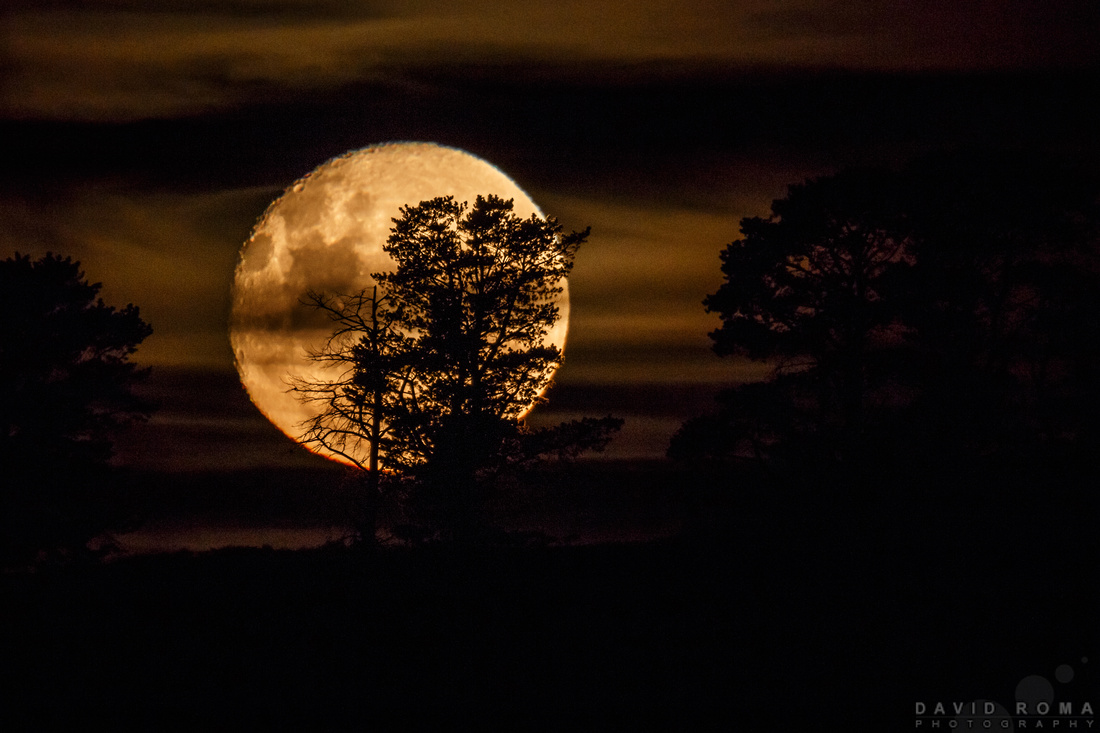 Bad Moon Rising - Bathurst, NSW, Australia