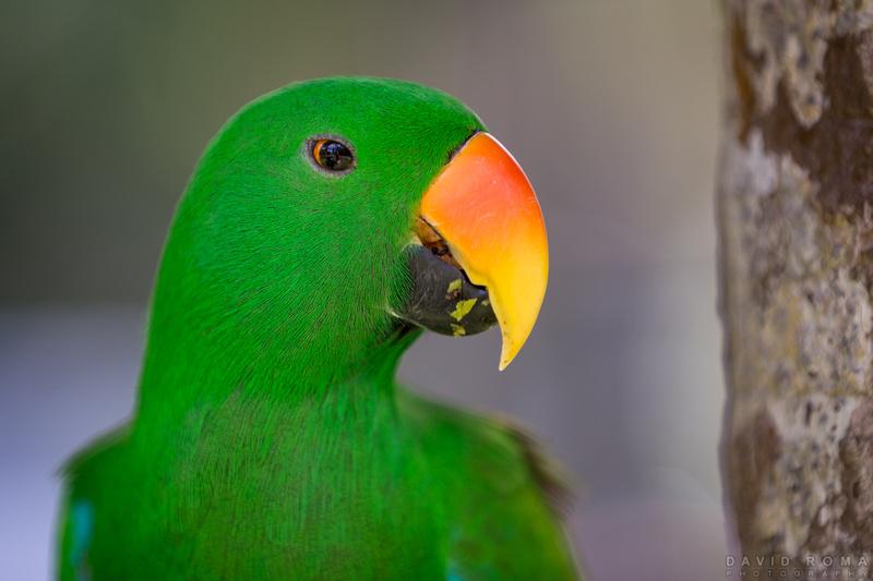 Parrot Poser